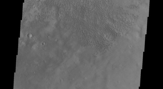This image of Moreux Crater shows part of the multitude of sand dunes that are found on the floor of the crater. The central peak of the crater is at the top left corner of this image from NASA's 2001 Mars Odyssey spacecraft.