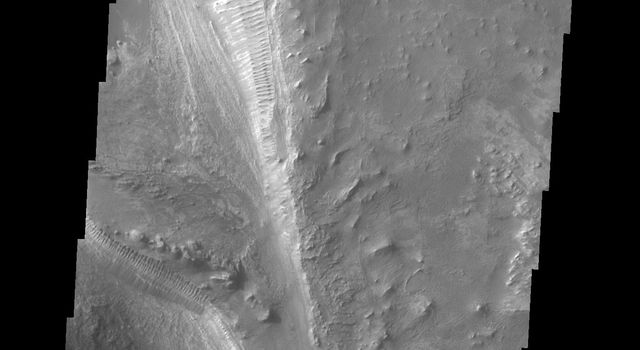 Melas Chasma is part of the largest canyon system on Mars. This image from NASA's 2001 Mars Odyssey spacecraft shows no dunes, but extensive outcrops of layered material.