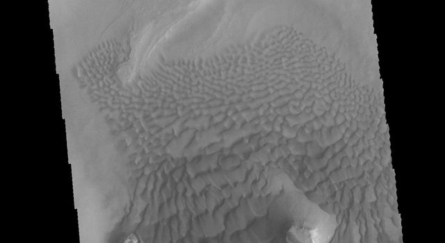 This image captured by NASA's 2001 Mars Odyssey spacecraft provides another instance where the topography of the upper floor material affects the winds and dune formation.