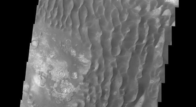 This image of the floor of Kaiser Crater captured by NASA's 2001 Mars Odyssey spacecraft contains a large variety of sand dune shapes and sizes. The 'whiter' material is the hard crater floor surface.