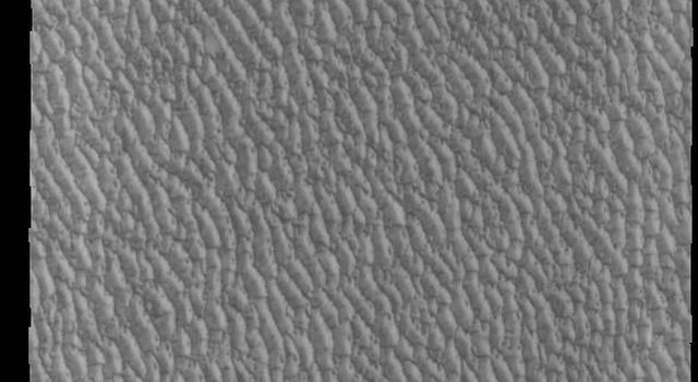This image of Olympia Undae from NASA's 2001 Mars Odyssey spacecraft was collected early in north polar spring. The crests of the dunes are light colored, indicative of a frost covering.