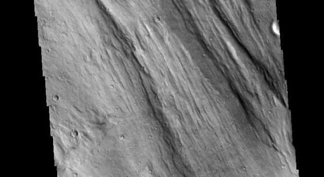 This image captured by NASA's 2001 Mars Odyssey spacecraft shows a small portion of Lobo Vallis near where it recombines with Kasei Valles and empties into Chryse Planitia.