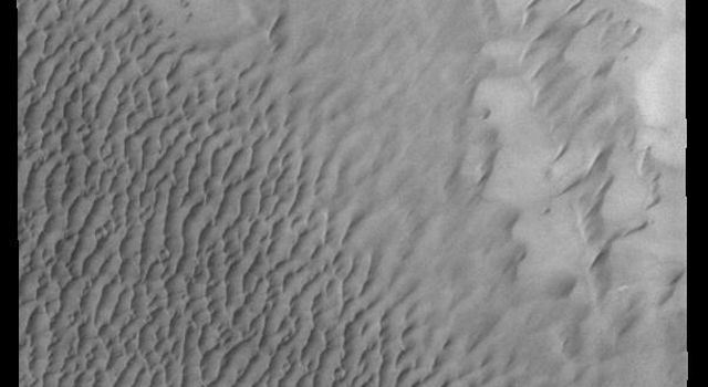 This image from NASA's Mars Odyssey shows a small part of the huge northern dune field called Olympia Undae. This dune field surrounds 1/3 of the north polar cap. Collected in northern summer, there is no frost remaining on the dunes in this image.