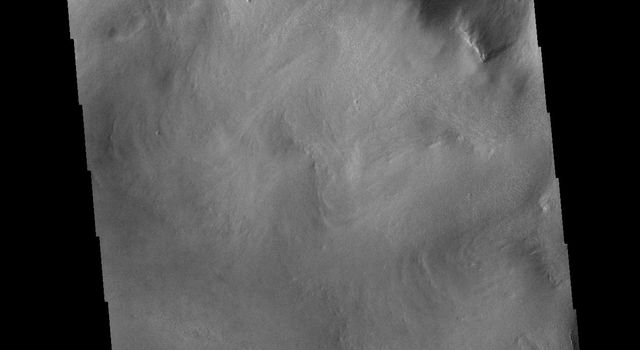 This image from NASAs Mars Odyssey shows multiple gullies dissecting the rim of this unnamed crater in Terra Cimmeria.