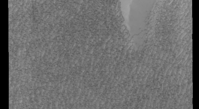This image from NASAs Mars Odyssey shows Olympia Undae, the largest of several dune fields that surround the north polar cap.