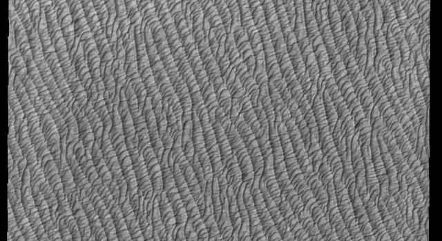 This image from NASAs Mars Odyssey shows part of Olympia Undae, the largest of several dune fields that encircle the north polar cap.