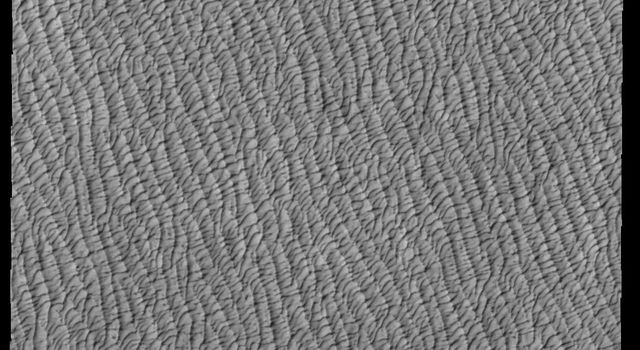 This image from NASAs Mars Odyssey shows a small portion of Olympia Undae. This large dune field is found near the north polar cap.