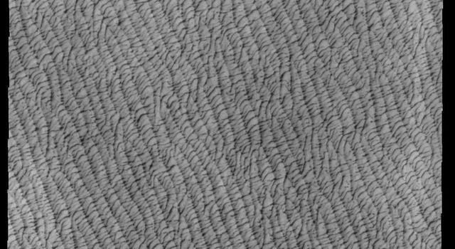 This image from NASAs Mars Odyssey shows a portion of Olympia Undae, a large dune field located near the north pole.