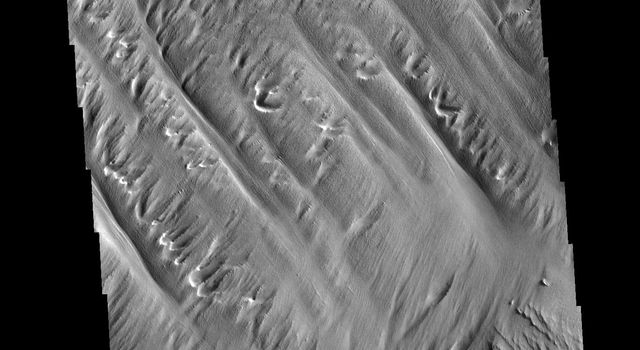This image from NASAs Mars Odyssey shows Eumenides Dorsum, a large linear rise located in southern Amazonis Planitia.