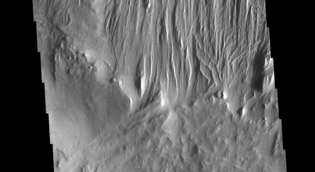 This image from NASAs Mars Odyssey shows evidence of long term wind action and erosion east of Eumenides Dorsum.