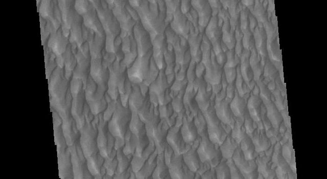 This image from NASAs Mars Odyssey shows sand dunes within Proctor Crater. These dunes are composed of basaltic sand that has collected in the bottom of the crater.