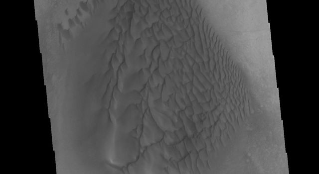 This image from NASAs Mars Odyssey shows a dune field on the floor of an unnamed crater in Noachis Terra.